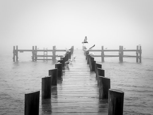 Home to the Seagull