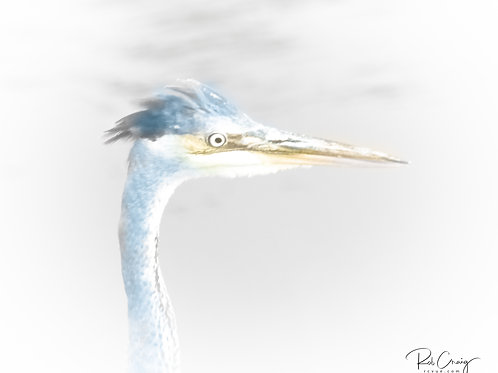 Great Blue Heron Abstract