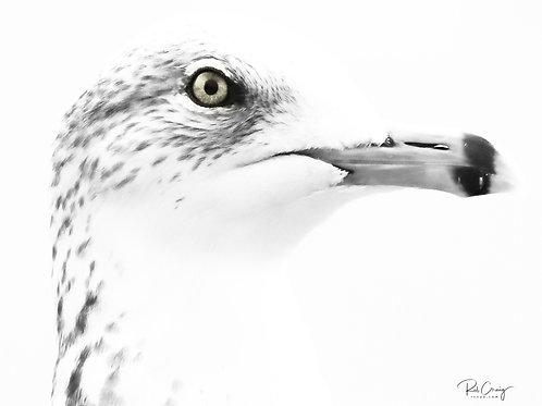 Pondering Seagull