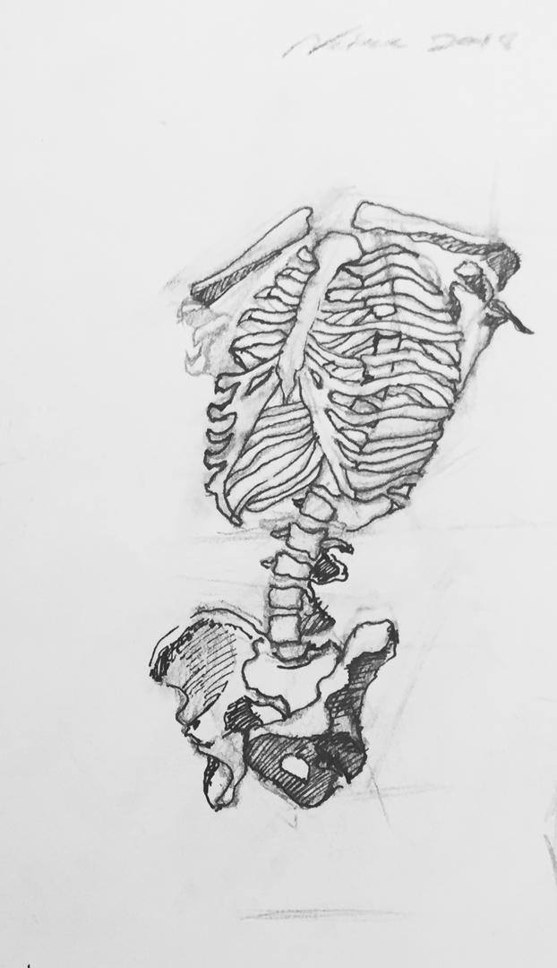 Rib Case Sketch