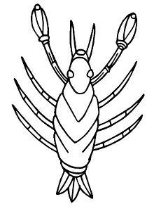 aragosta spessa-01.jpg