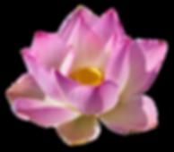 lotus-3192656_1280.png