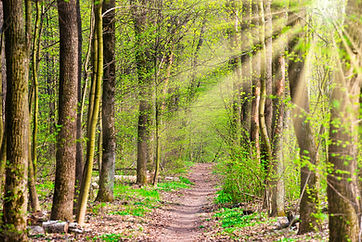 bigstock-Green-Spring-Forest-With-First-