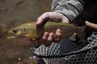 Fly Fishing Mendoza - Yellow Creek