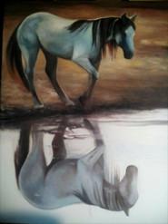 horse ch ex5 (2).jpg