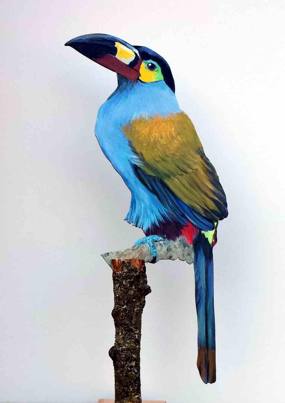 Blautukan-487-a-Dekovogel-andigena hypoglauca