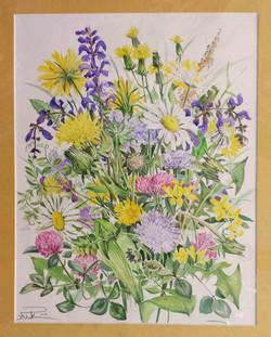 Wiesenblumen 2 Margeriten Löwenzahn