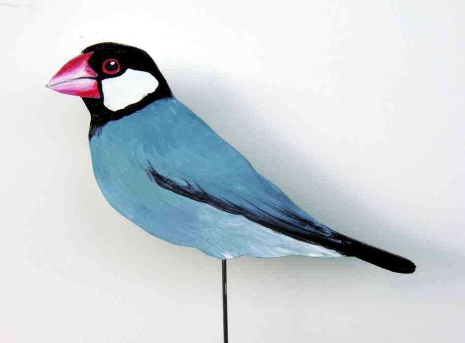 315-a-Reisfink-lonchura oryzivora-java sparrow