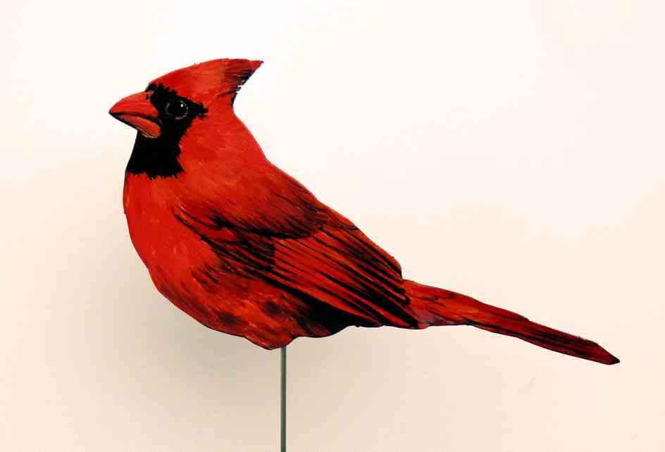 127-a-Roter Kardinal-cardinalis cardinal