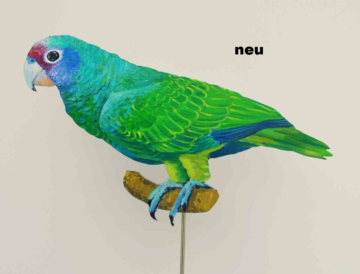 Blaukappenamazone-218a-Dekovogel