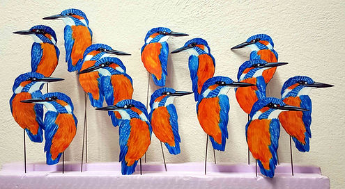 Die neue Generation: Eisvögel (alcedo at