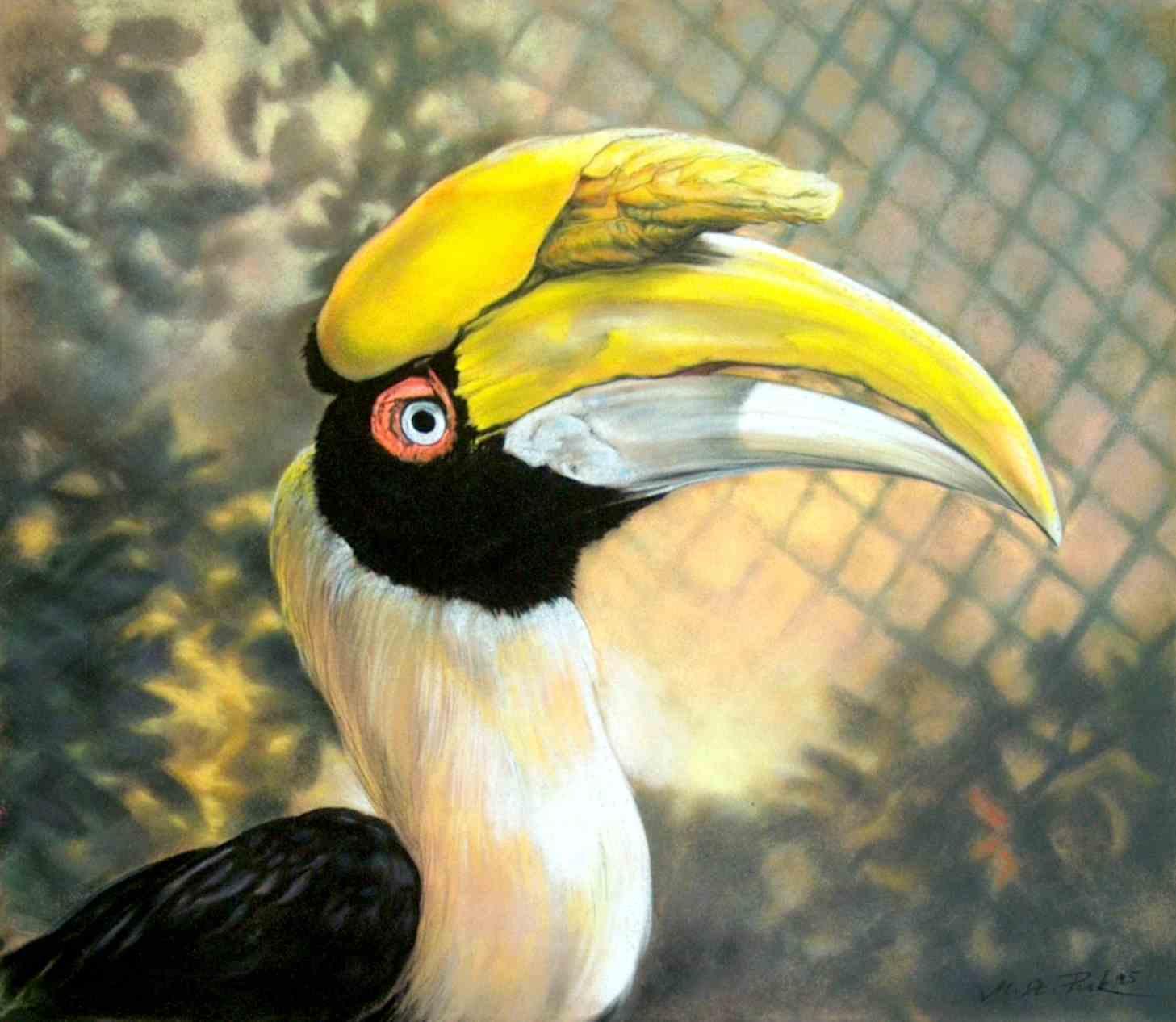 grosser hornvogel pastellzeichnung
