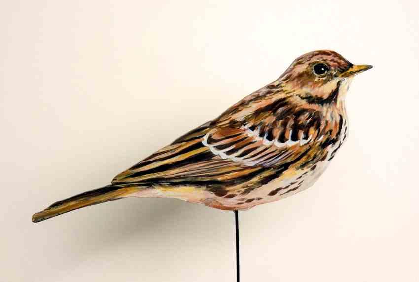 589-a-rotkehlpieper-Anthus cervinus