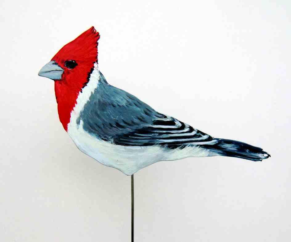 555-b-Graukardinal-paroaria coronata-red