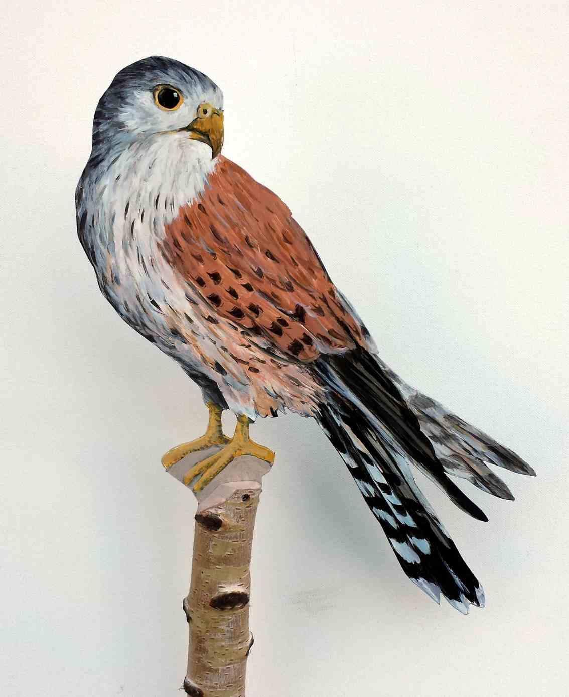 Turmfalke-299-a-Dekovogel-falco -tinnuncu