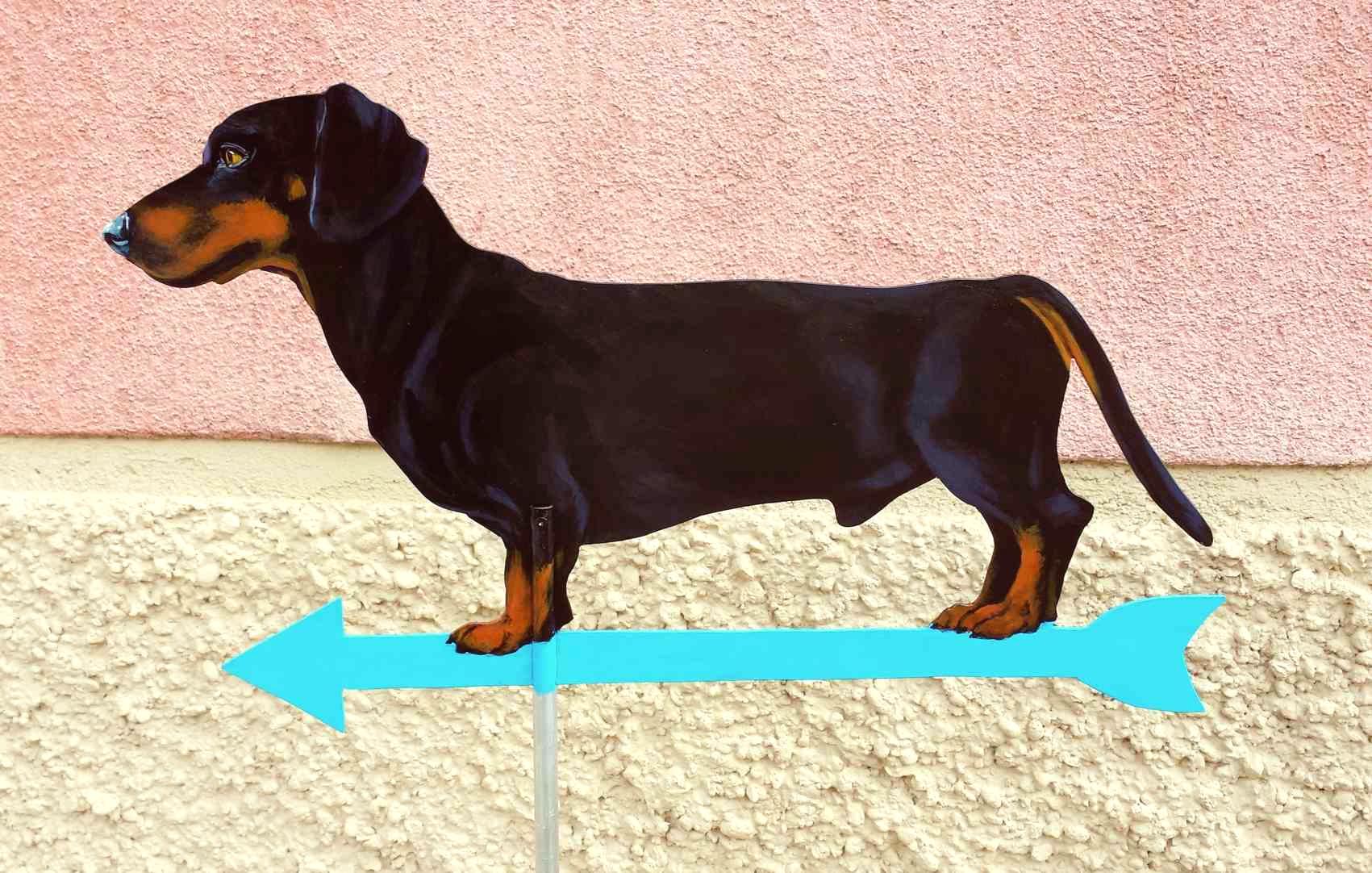 kurzhaardackel-schwarz-braun-wetterfahne