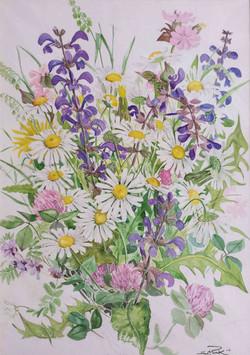 Wiesenblumen mit Salbei Margeriten