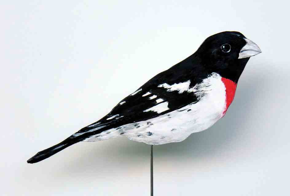 457-a-Rotbrust-Kernknacker-pheuticus ludovicia