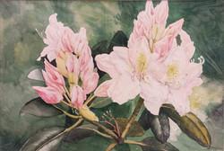 Azaleenblüten - Aquarell