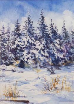 verschneite Tannenbäume Aquarell