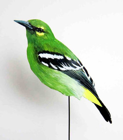 649-a-Smaragdiora-Aegithina viridissima-
