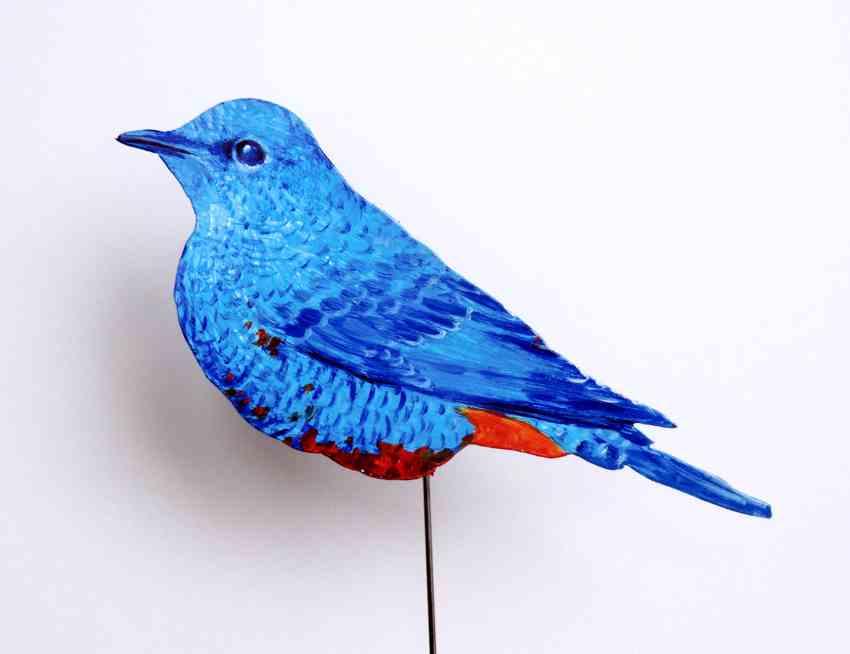 181-a-blaumerle-monticola solitarius