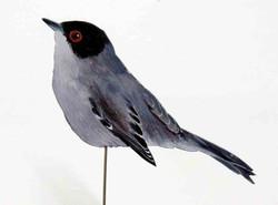 Samtkopfgrasmücke 117a-Dekovogel