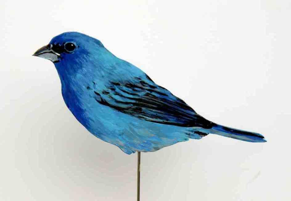 190-a-indigofink-passerina cyanea-indigo