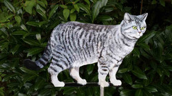 Wetterfahne-Tigerkatze Mia rechts