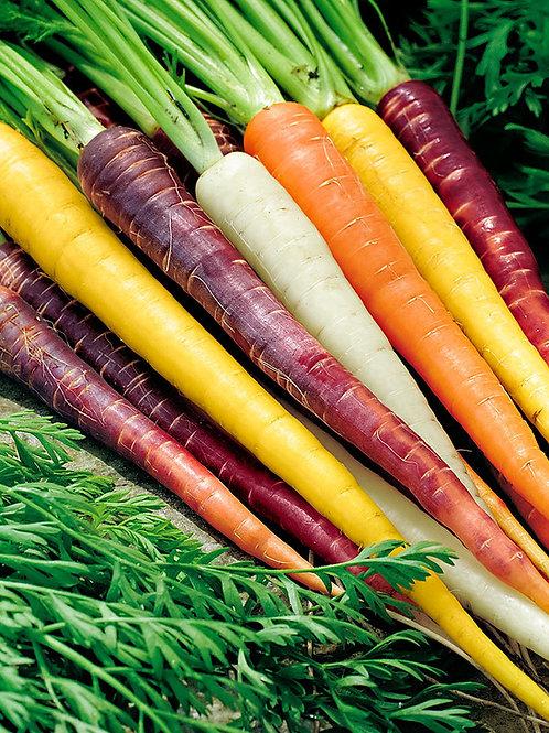 carotte arc-en-ciel