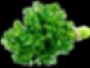 le-persil-medicament-en-herbe_edited.png