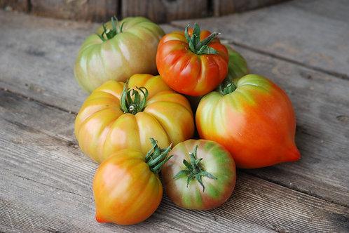 Lot de tomate ancienne