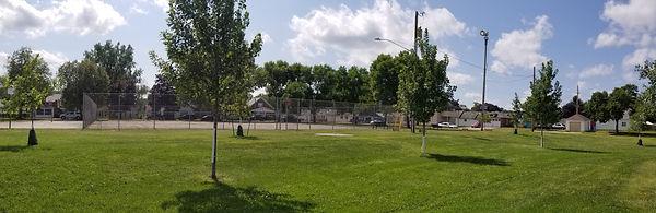 sobieski park tree two.jpg