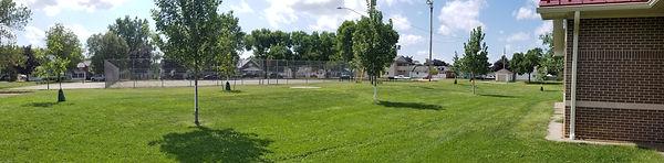 sobieski park tree one.jpg
