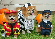 Firefighter-Lilikoi-Jail-Dog-Buster-and-