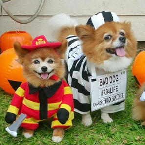Firefighter-Lilikoi-Jail-Dog-Buster-and-Police-Dog-Rella-Costumes-for-Halloween-Pet-Parade
