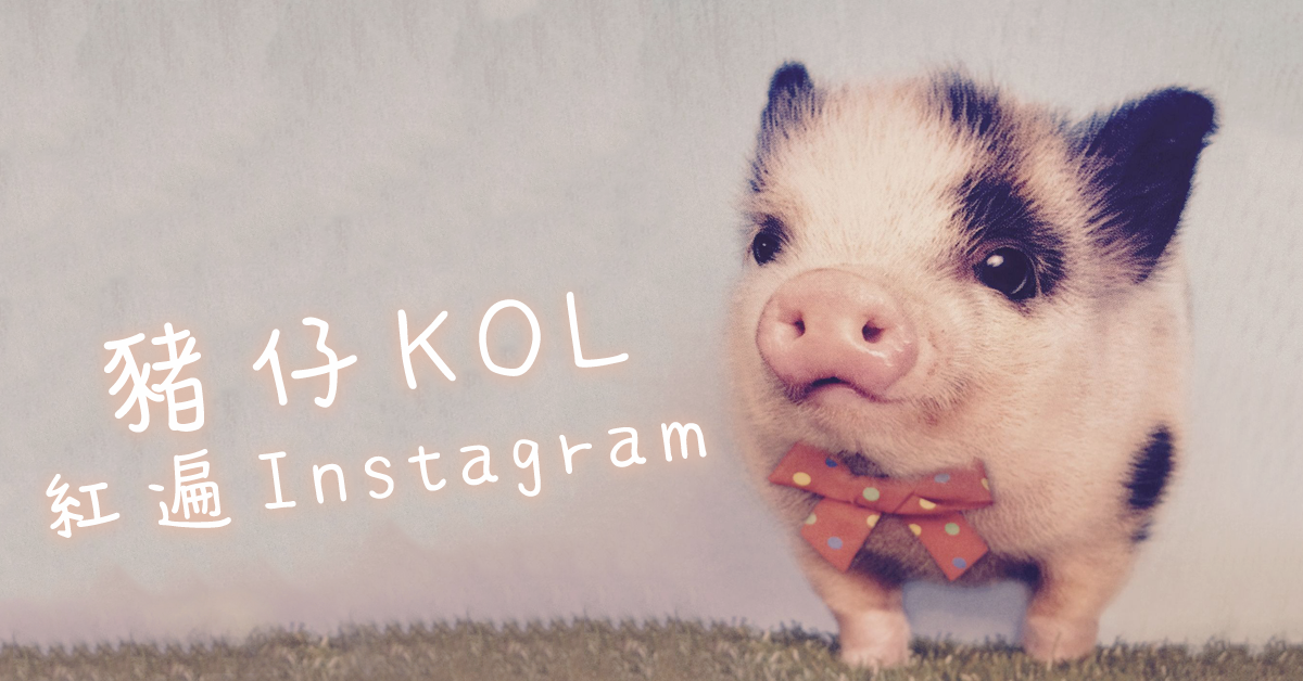 【豬仔 KOL 紅遍 Instagram】
