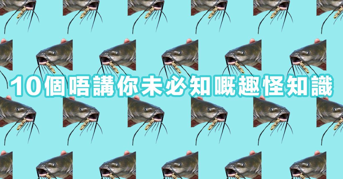 【10 個唔講你未必知的趣怪知識】