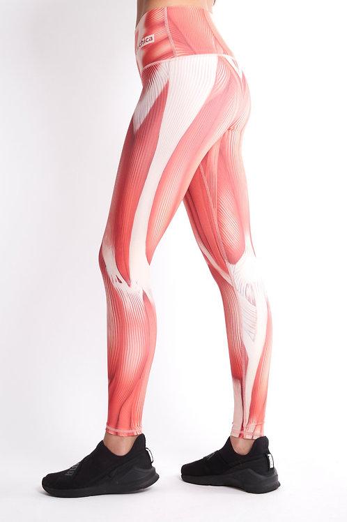 Muscle legging