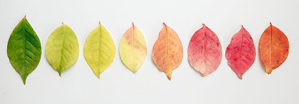 flat-lay-of-autumn-leaves-changing-color