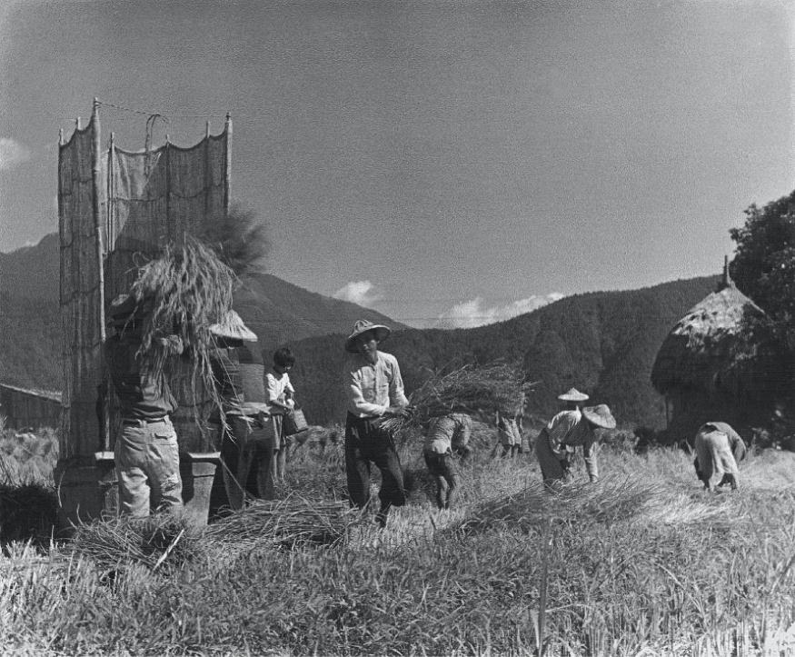 《收割》, 1943