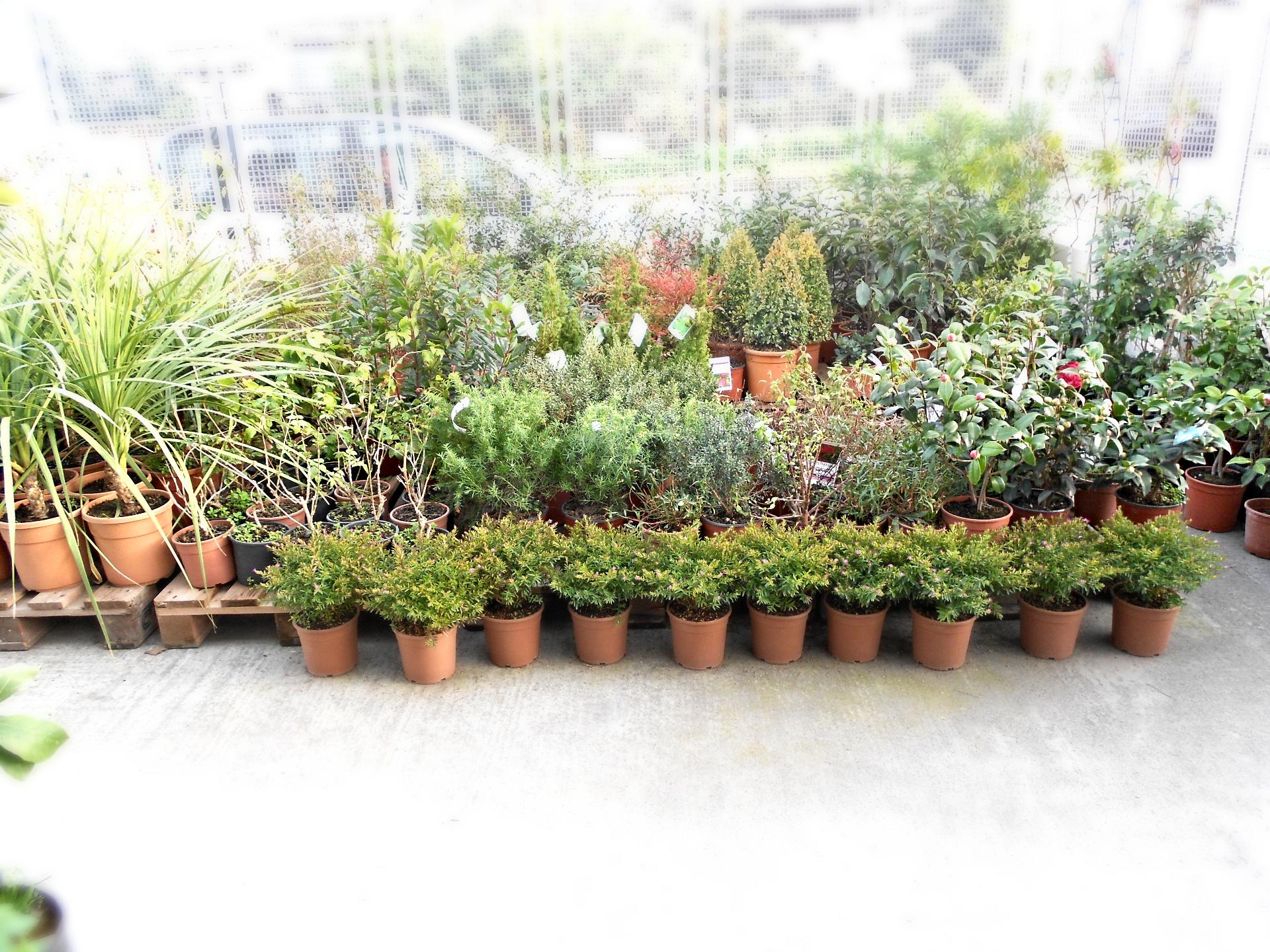 Un giardino pieno di vita