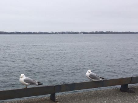 Social Distancing - Birds Do It