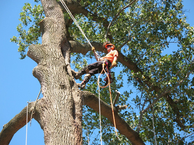 erick-tree-care-work.jpg