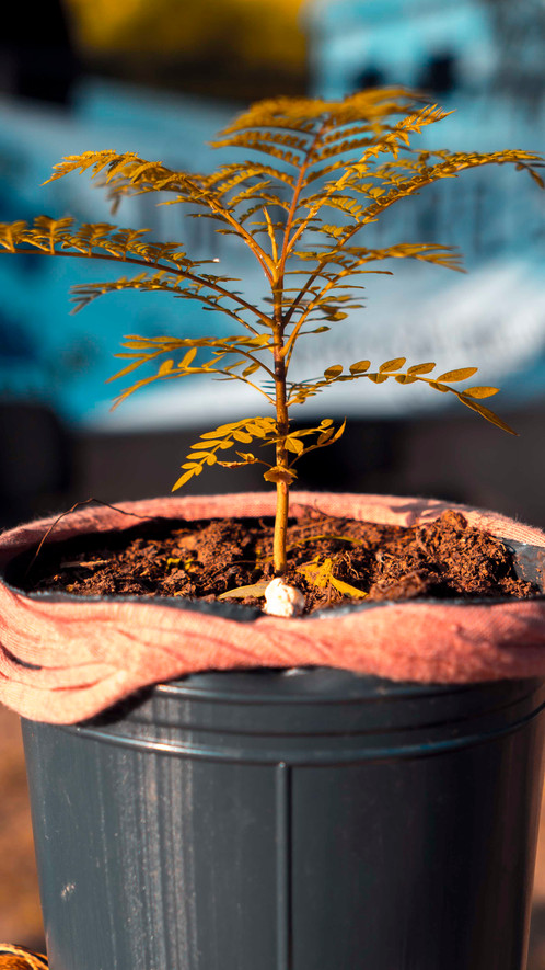 Eco Picnic / 3 de marzo / Usina Cultural