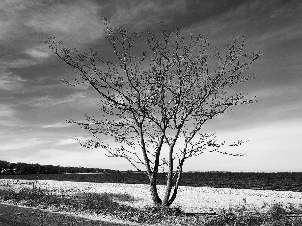 ellen-watson-long-beach-tree-jan-2021-B+