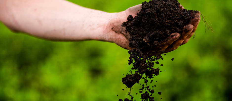Grow some food!  Why gardening matters to home designers?