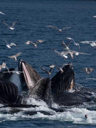 The Humpbacks of Southeast