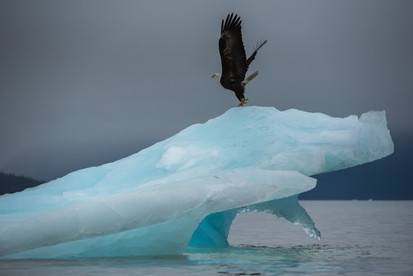 Icy Flight