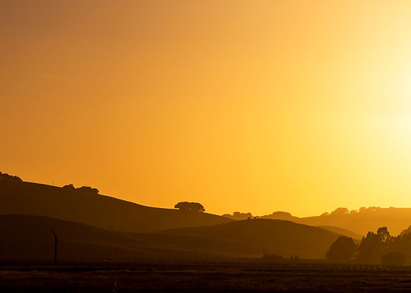 Vineyard Sunset (2018)